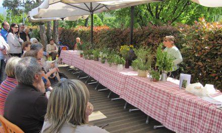 Al Ristobio si cucina con le erbe spontanee