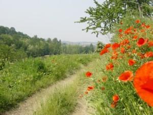 4 passi in compagnia nel PLIS Valle d'Albano