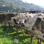 """Abbazia, 7 e 8 settembre: grandi novità alla 5^ """"Mostra agro-zootecnica della Valle del Lujo"""""""