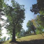 """Concorso letterario """"Le coti"""", per valorizzare i castagneti del Monte Misma"""